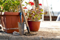 Flowers and garden tools Royalty Free Stock Images
