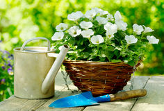 Flowers with garden tools Stock Photography