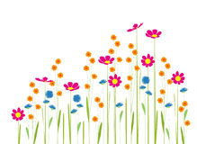 Flowers vector illustration
