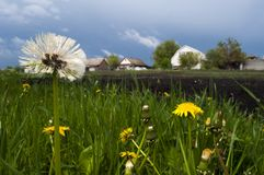 Flowers in the garden. Wildflowers, small rural houses Stock Image