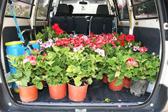 Flowers in gardener car Stock Images