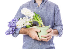 Flowers in gardener`s or florist`s hands isolated on white Royalty Free Stock Photos