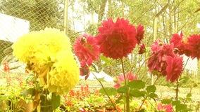 Flowers gardening Stock Photo