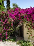 Flowers gate beautiful colors. Flowers gate beutiful beautiful col colo color colors royalty free stock photo