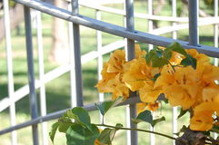 Flowers with gate Stock Photo