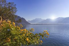 Flowers at Geneva lake, Montreux, Switzerland. Yellow flowers at Geneva lake, Montreux, Switzerland. See Alps mountains in the background Royalty Free Stock Photography