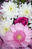 Flowers - Gerbera And Chrysanthemums Stock Image