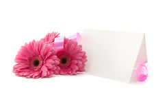 Flowers Gerbera, ribbon and a blank white card, isolated Royalty Free Stock Photo