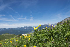 Flowers and German alps Stock Photo