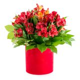 Flowers in the gift box. Alstroemeria flowers in the red gift box isolated on white background Royalty Free Stock Photography