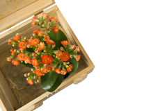 Flowers and gift box. Isolated on white background Stock Photography