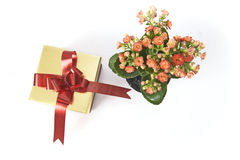 Flowers and gift box. Isolated on white background Royalty Free Stock Photo