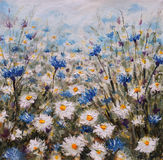 Flowers. Glade of cornflowers and daisies. Summer flowers. Royalty Free Stock Photography