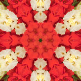 Flowers gladiolus. In the form of a picture of a kaleidoscope Stock Photography