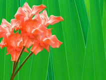 Flowers gladioluses Royalty Free Stock Image