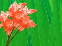 Flowers gladioluses Royalty Free Stock Image