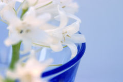 Flowers In Glass. White flowers in a blue glass on blue background Royalty Free Stock Image