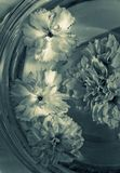 Flowers in a glass bowl with water Royalty Free Stock Images