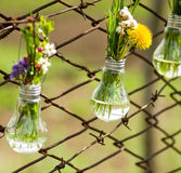 Flowers in glass bulbs on fence Stock Photos