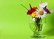 Flowers in a glass green Royalty Free Stock Image