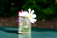 Flowers in glass jar Royalty Free Stock Images