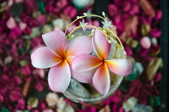 Flowers in glass. On the table Stock Image