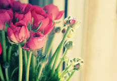 Flowers in a glass vase Stock Images