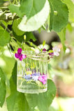 Flowers in a glass Stock Images