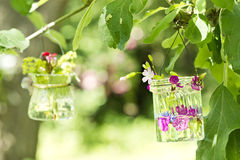 Flowers in a glass Royalty Free Stock Image