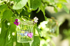 Flowers in a glass Stock Photo