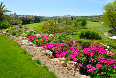 Flowers in golf course Stock Photo