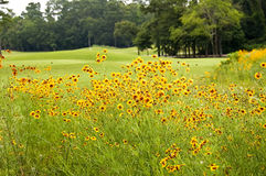 Flowers on a golf course. Stock Image