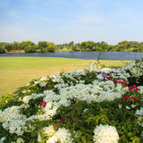 Flowers on golf course Royalty Free Stock Images