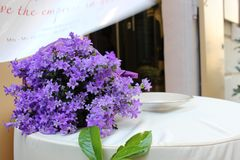 Flowers. good background royalty free stock images