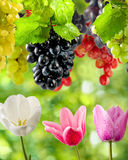 Flowers and grapes in garden close-up Stock Images