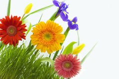 Flowers and grass Stock Images