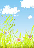 Flowers in the grass. Illustration of colored flowers with wet grass and clouds on the light blue background at the summer Stock Photography