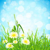 Flowers and Grass Royalty Free Stock Images