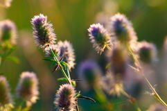 Flowers in the grass. Wild flowers in a meadow at sunset stock photos