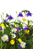 Flowers in a grass Stock Photography