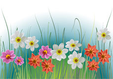 Flowers and grass. Floral background Royalty Free Stock Image