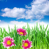 Flowers in the grass against the sky Royalty Free Stock Photography