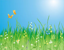 Free Flowers, Grass And Butterfly Stock Photography - 1894362