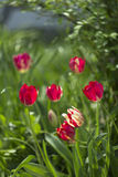 Flowers. On the grass blossom royalty free stock photos