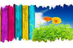 Flowers in Grass, Blue Sky and Wooden Fence Royalty Free Stock Photo
