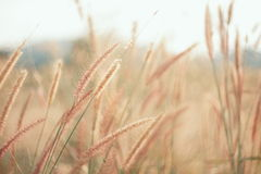 Flowers grass blurred  background. In vintage tone Royalty Free Stock Images