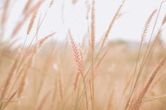 Flowers grass blurred background. Flowers grass blurred  background in vintage tone Stock Photo