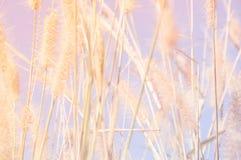 Flowers grass blurred bokeh Stock Photos