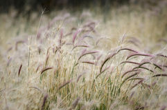 Flowers and grass in El Calafate, Argentina Royalty Free Stock Images