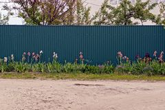 Flowers and grass in front of the green iron fence royalty free stock photos